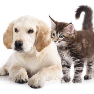 Tier OP Versicherung Vergleich online berechnen
